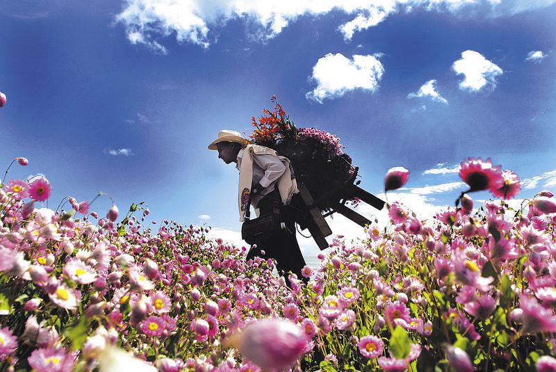 Flores Colombianas: tradição e bons negócios